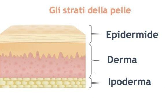 gli strati della pelle